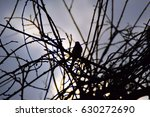 silhouette of small bird on a ...