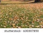 the autumn in new zealand  ... | Shutterstock . vector #630307850