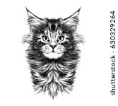 Kitty Baby Breed Maine Coon...