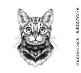 cat breed bengal spotted... | Shutterstock .eps vector #630329276