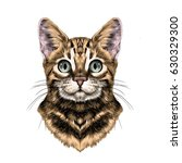 cat breed bengal spotted... | Shutterstock .eps vector #630329300