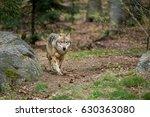 wolf | Shutterstock . vector #630363080