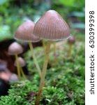 mushrooms | Shutterstock . vector #630399398