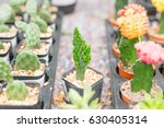 mini cactus in pot for sale. | Shutterstock . vector #630405314