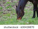 horse | Shutterstock . vector #630428870
