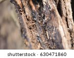 black ants in a dry tree | Shutterstock . vector #630471860