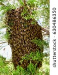 Small photo of swarm of bees
