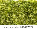 the algae background texture | Shutterstock . vector #630497324