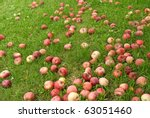 Many Fallen Red Apples In Gree...