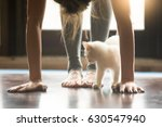 Yoga Fitness With Funny Pet...