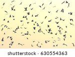 a flock of seagulls flying in... | Shutterstock . vector #630554363
