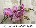 lovely pink orchid with space... | Shutterstock . vector #630611648