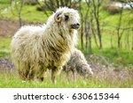 sheep on hill in spring | Shutterstock . vector #630615344
