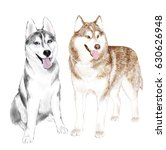 two adult siberian husky dogs... | Shutterstock .eps vector #630626948