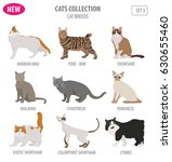 cat breeds icon set flat style... | Shutterstock .eps vector #630655460