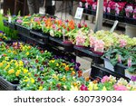 flower plants shop flea market...   Shutterstock . vector #630739034