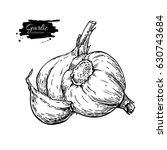 garlic hand drawn vector... | Shutterstock .eps vector #630743684