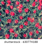 red tulips pattern | Shutterstock . vector #630774188