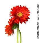 red gerber flower | Shutterstock . vector #630780080