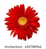 the red gerbera isolated on... | Shutterstock . vector #630788966