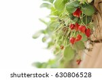 Cultivating Strawberries In A...