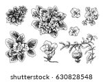 set of hand drawn vector... | Shutterstock .eps vector #630828548
