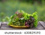 an image of green lettuce... | Shutterstock . vector #630829193