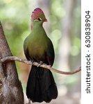 beautiful tropical bird  ... | Shutterstock . vector #630838904