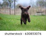 little cute brown labrador... | Shutterstock . vector #630853076