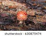 Small photo of Fly amanita mushroom (agaric). Forest floor with fly amanita mushroom