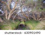 Dense Wetland Trees And Grasse...