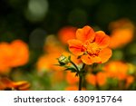 close up of spring flower on... | Shutterstock . vector #630915764