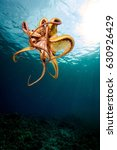 hawaiian octopus  | Shutterstock . vector #630926429