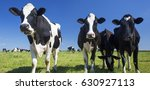 cows on green grass with blue... | Shutterstock . vector #630927113