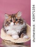 Stock photo cute beautiful gentle kitten on a pink background happy cat 630971354