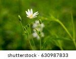white flower and bud on green...   Shutterstock . vector #630987833