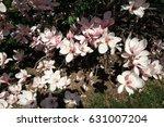pink flowers of blooming... | Shutterstock . vector #631007204