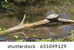 A Turtle Resting On A Log...