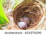 Bulbul Chick And Egg In Nest ...