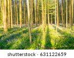 sunrise illuminating the... | Shutterstock . vector #631122659