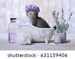 Stock photo funny adorable kitten in a bathtub relaxing 631159406