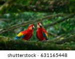 pair of big parrot scarlet... | Shutterstock . vector #631165448