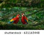 pair of big scarlet macaws  ara ... | Shutterstock . vector #631165448