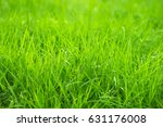 green grass | Shutterstock . vector #631176008