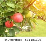 ripe red apples and green... | Shutterstock . vector #631181108