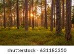 estonia. pine forest. spring.... | Shutterstock . vector #631182350