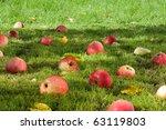 Fallen Appless In The Garden.