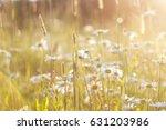 Light Golden Background Of...