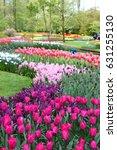 serpantine flowerbed. tulip... | Shutterstock . vector #631255130