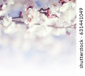 blooming tree background with...   Shutterstock . vector #631441049